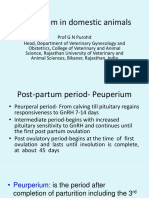 Vet Obst Lecture 6 Peurperium in Domestic Animals