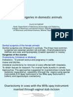 Vet Obst Lecture 11 Genital Surgeries in Domestic Animals