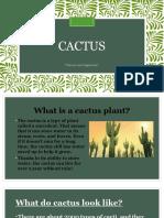 Cactus Ppt