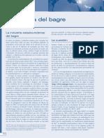 Marketing Internacional - La Disputa del Bagre (Caso práctico)