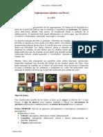angiospermas_frutos_texto.pdf