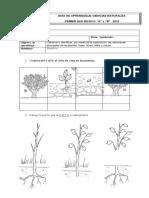 Guía de Plantas