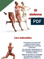 El sistema muscular.pptx