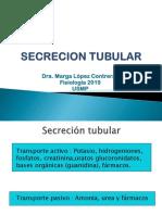 Excrecion Tubular 2019