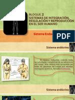BLOQUE-2-sistema-endócrino