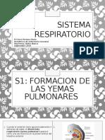 Sistema respiratorio- Sol.pptx