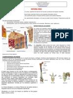 Sistema Oseo y Muscular