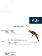 taxonomia Mauren