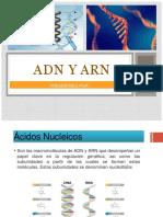 ARN Y ADN