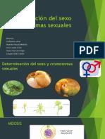 Determinación Del Sexo y Cromosomas Sexuales