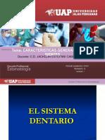 anatomia dental y oclusion