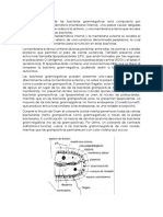 Estructura gram negativo