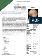 Plutón (Planeta Enano) - Wikipedia, La Enciclopedia Libre