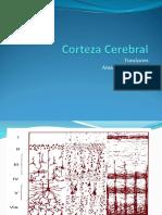 Corteza cerebral.ppt