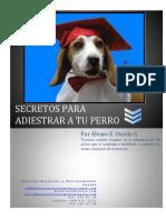 Secretos para adiestrar a tu perro