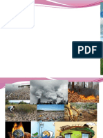 Environmental Degradation1