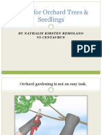 Caring for Orchard Trees Seedlings