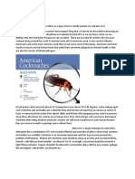 Roach Infestations and Prevention