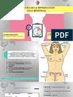 TEMA 02- Fisiologia de La Reproducción- Ciclo Menstrual