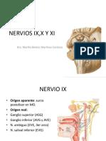 NERVIOS IX,X Y XI