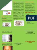 IV Par CraneaL TRIPTICO.docx