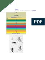 Blattodea.pdf