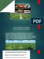 insectos y plagas.pptx