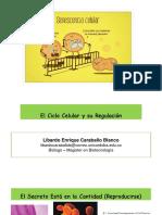 8. Ciclo Celular y Su Regulación