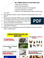 MODULO 1características Insectos