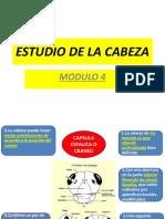 MODULO 4 Cabeza