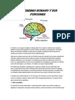 Cerebro (Autoguardado)(1)
