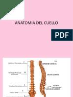 Anatomia Del Cuello