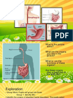 Digestive System and Its Parts