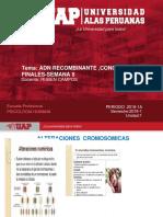 SEMANA VIII -BIOLOGÍA GRAL- 2018-1.pdf