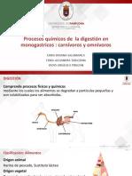 Procesos químicos de la digestión de carnívoros