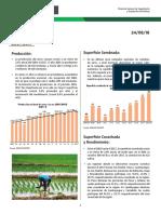 coyuntura-arroz.pdf