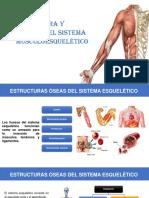 estructura y funcion muscoesqueleticas