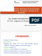 T 20 Lipogenesis