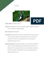 Aves Extintas (1)