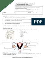 TALLER Sistema Reproductor y Ciclo Ovarico