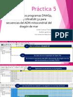 Tutorial DNASp para secuenciar ADNm