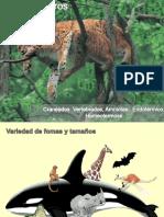 Guia de estudio Mamiferos 2015 UCV.pdf