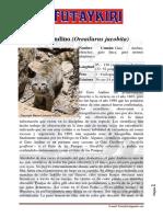 49262389-El-gato-andino.pdf