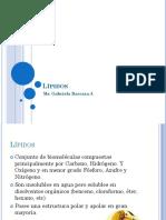 LIPIDOS (1).pdf
