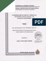 269685505-Fitorremediacion-de-suelos-contaminados-por-plomo.pdf
