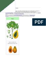 Carica papaya.docx