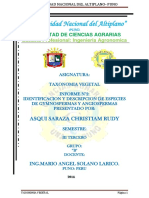 348385199-TAXONOMIA-INFORME-2.docx