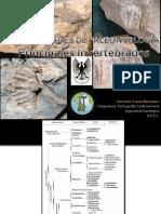 PALEONTOLOGIA REINO ANIMAL.pdf