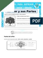 21 Ficha La Flor y Sus Partes Para Cuarto de Primaria (1)