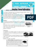 24 Ficha Los Animales Invertebrados Para Cuarto de Primaria